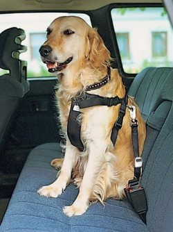 TRIXIE ремень 50-80см безопасности для собак