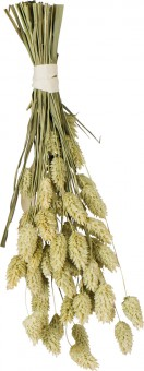JR FARM Ветка канареечного семени 20г