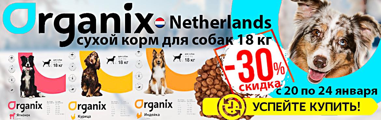 organix dog 1