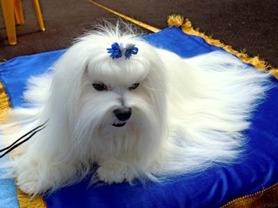 Папильотки для собак