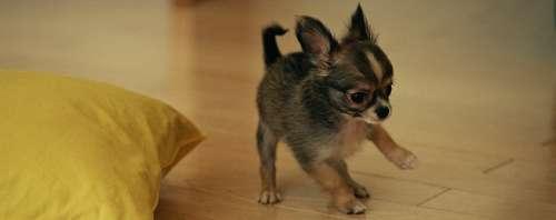 Корма для мелких пород собак