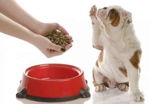 Дешевый корм для собак