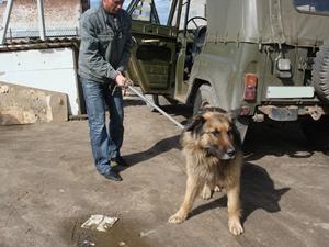 Петля для отлова собак