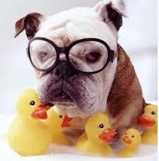 Купить игрушки для собак в СПб
