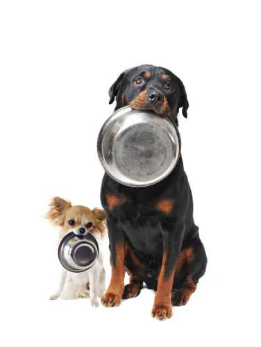 Купить товары для собак