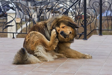 Спрей Стоп зуд для собак