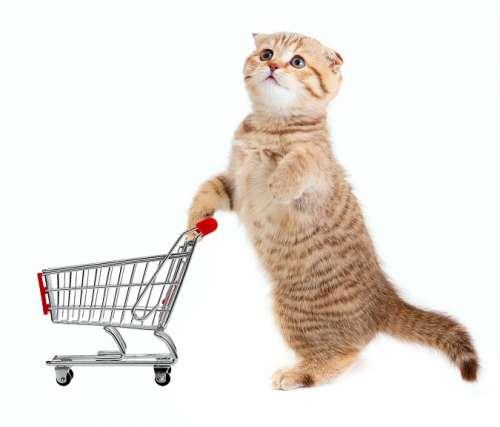 Купить товары для кошек