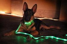 Купить светящийся ошейник для собаки в СПБ
