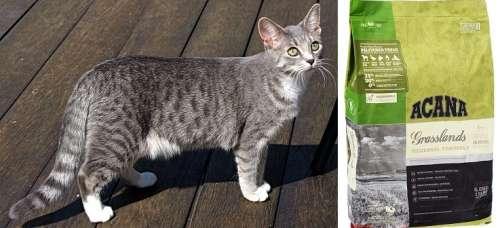 Корма акана для кошек