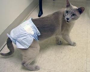Подгузники для кошек